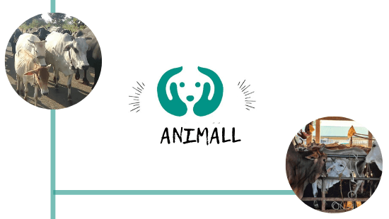 Animall- A Startup Connecting Cattle Buyers And Sellers
